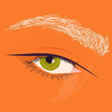 Illustration of eye