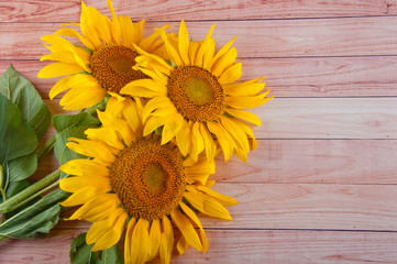 Bright bouquet of three yellow sunflowers laying on light brown wooden background
