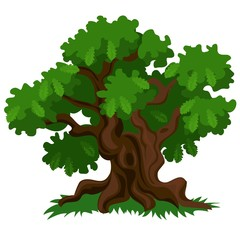 A deciduous oak tree with green leaves and fresh grass isolated on white background. Vector cartoon close-up illustration.
