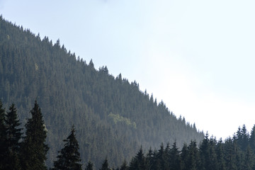 Forested mountain slope in low lying cloud with the evergreen conifers shrouded in mist in a scenic landscape view, Carpathian Ukrane