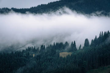 Spoed Fotobehang Ochtendstond met mist Forested mountain slope in low lying cloud with the evergreen conifers shrouded in mist in a scenic landscape view, Carpathian Ukrane