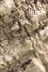 Texture of palm bark.Macro extreme close up.