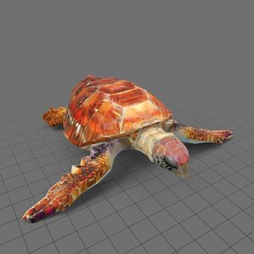 Stylized loggerhead sea turtle
