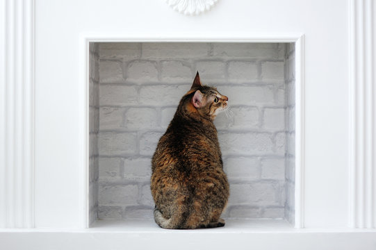 Back view of a tabby cat sitting in the fake fireplace