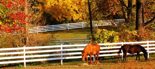 Horses in pasture during autumn
