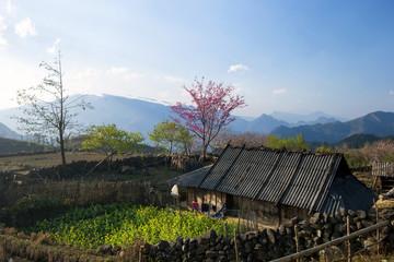 Vietnam highland