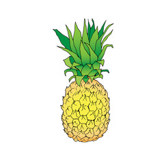 isolated vector color line illustration of pineapple