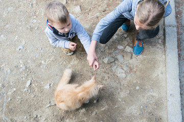 Children on the street are fed a street red cat.