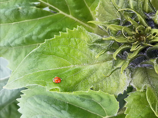 Lady bug on leaf,that covered small rain drop