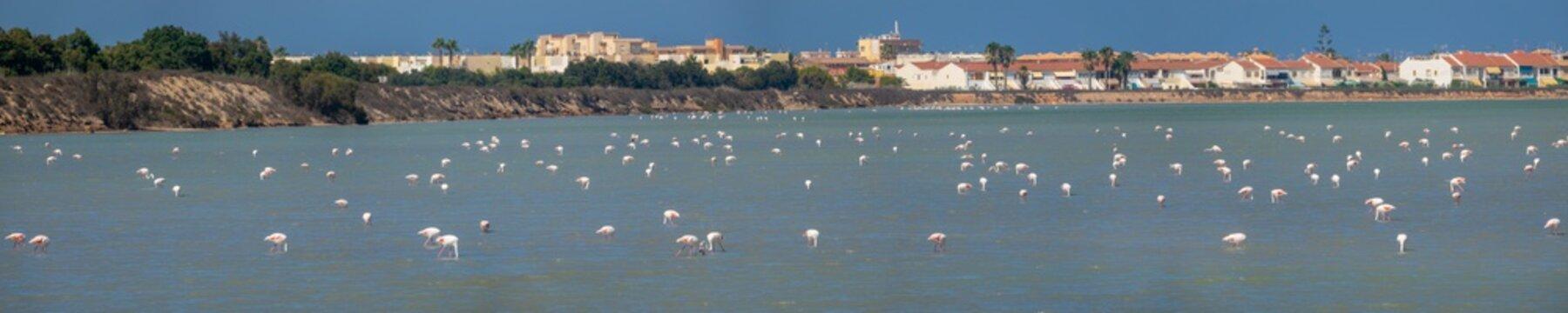 Flock of pink flamingos in the salt lake