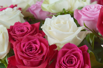 A large bouquet of red, pink and white roses close-up. Congratulations on the holiday. Love and tenderness.
