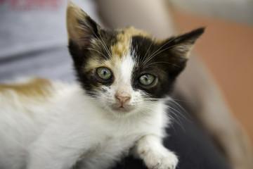 Stray kitty  cat