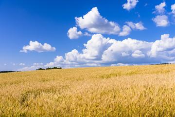 Fototapete - 丘の町・美瑛の田園風景