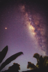 Silhouettes of coconut trees with southern hemisphere Milky Way stars.