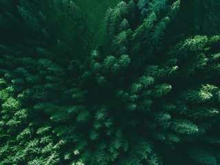 Aerial top view pine forest.