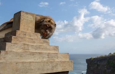 Agressive monkey at  Pura Luhur Temple, Uluwatu, Bali, Indonesia