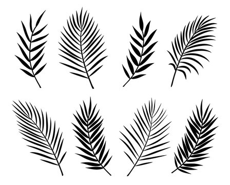 black isolated palm leaves and branches on white