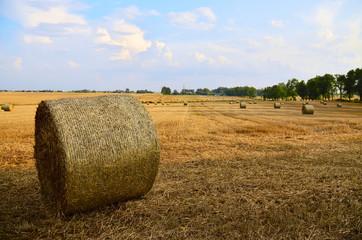 Fototapeta Belka słomy na polu, wiejski krajobraz obraz