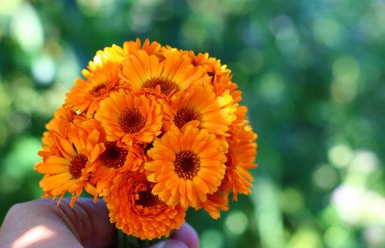 bouquet of orange flowers in a woman's hand