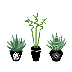 green house plants in the black pots haworthia aloe sansevieria bamboo branch with leaves scandinavian style asia tropical boho illustration icon set vector