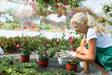 Florist planting flowers