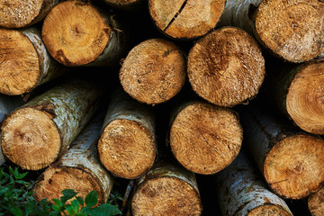 Close up of cut tree trunk. Background chopped firewood logs stacked up on top of each other in a pile. Logs of wood, cross cut. Stump stack background. Logs of trees in nature. A lot of cutted logs.