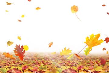 Herbst 185