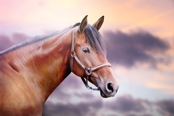 Horse with beautiful evening sky