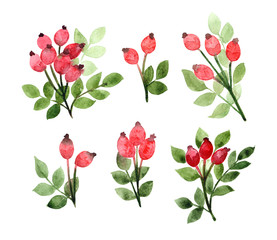 watercolor dogrose brances with rosehip and leaves, hand painted floral design elements set