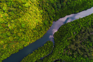 River in tropical mangrove green tree forest