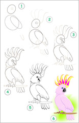 Page shows how to learn step by step to draw a cute little cockatoo parrot. Developing children skills for drawing and coloring. Vector image.