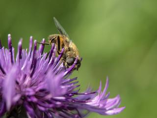 Obraz pszczoła - fototapety do salonu