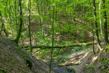 scenic Tiefenbach path in the forest of Sankt wendel