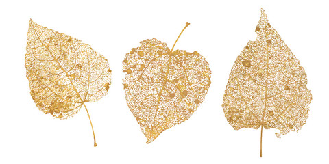 Set of golden leaves skeletons. Fallen foliage for autumn designs. Natural leaf of aspen and birch. Vector illustration