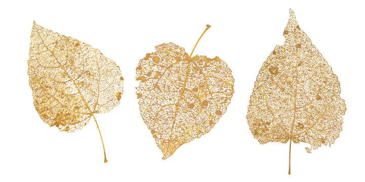 Set of golden leaves skeletons. Fallen foliage for autumn designs. Natural leaf of aspen and birch. Vector illustration