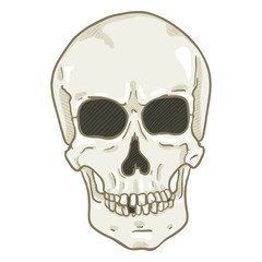 Vector Single Cartoon Illustration - White Human Skull