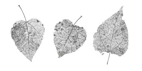 Set of black gray skeletons leaves on white background. Fallen foliage for autumn designs. Natural leaf aspen and birch. Vector illustration