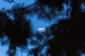 Lua entre as Árvores