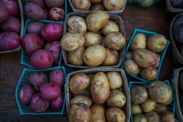 Organic potatoes. Farm fresh vegetable. Beautifully displayed in attractive baskets. Eco potatoes on sale at outdoor farmers market. Raw potato food. Different varieties of potatoes in a shelf.