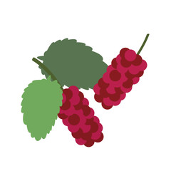 Healthy organic red mulberry