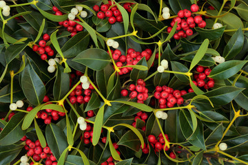 Winter berry holly and mistletoe background. Traditional Christmas greeting card for the holiday season.