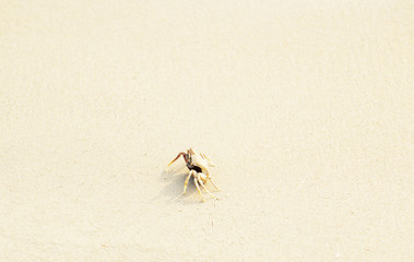 A crab that walks on the beach, the seafront, the morning