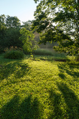 Atmospheric landscape of shadows dew and mist on a treed lawn