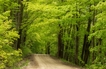 An inviting dirt road leading into a green fresh spring woodland