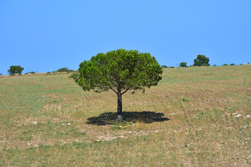Italy, Puglia region, view and detail in the high Murgia area with wells, trees, meadows,