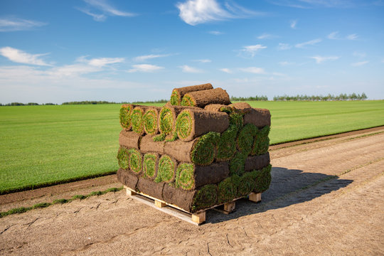 Rolls of turf stacked in preparation ready to be laid in ground Lawn