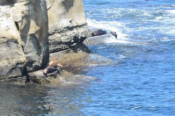 La Holla Shores Cove, San Diego, Ca. Afternoon Siesta