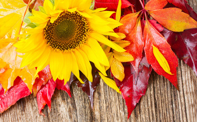 fresh yellow sunflower and fall leaves on wooden background banner