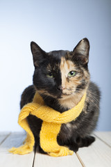 cat in a yellow scarf on a isolated white background