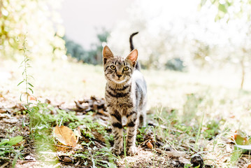 Domestic cat is looking at the camera while playing in the garden